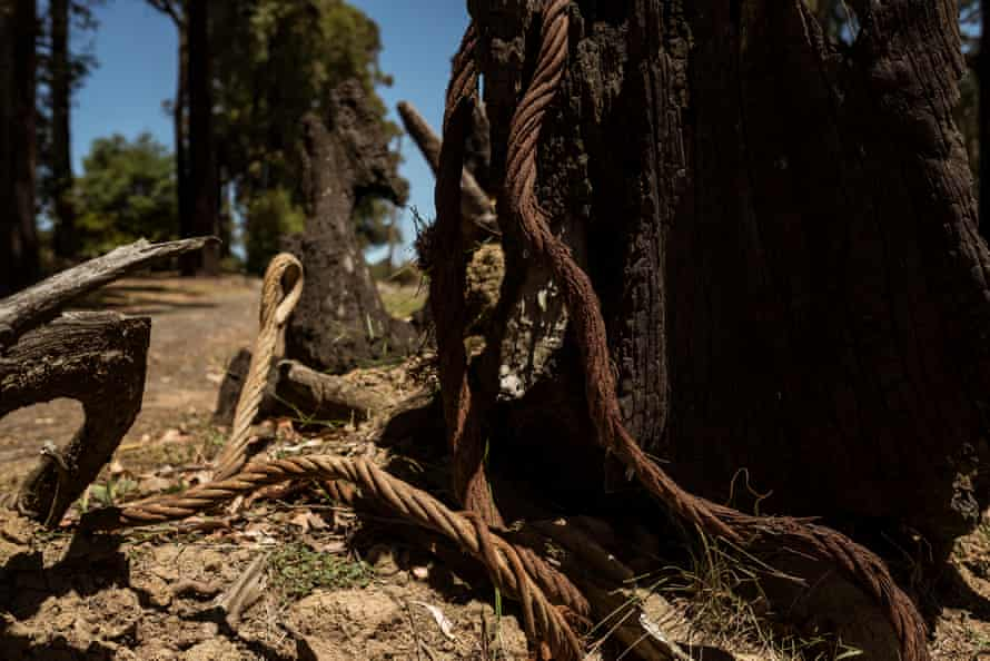 A burnt log and wire is all that remains of this power line after the Black Saturday bushfire in Kinglake