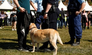Police officers and drug detection dogs walk among festivalgoers at the 2019 Splendour in the Grass
