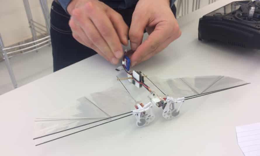 Matěj Karásek prepares to launch a DelFly robot on a test flight at Delft University of Technology.y
