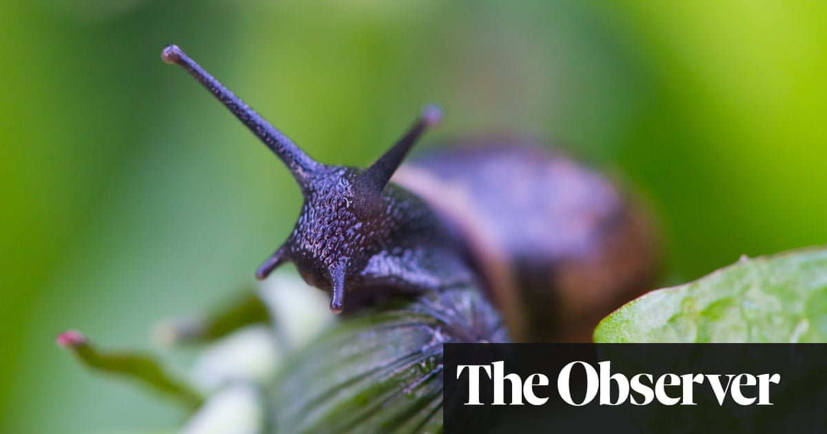 Say goodbye to slugs, snails, mice and badgers | Life and style