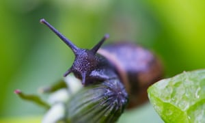 Say goodbye to slugs, snails, mice and badgers | Life and