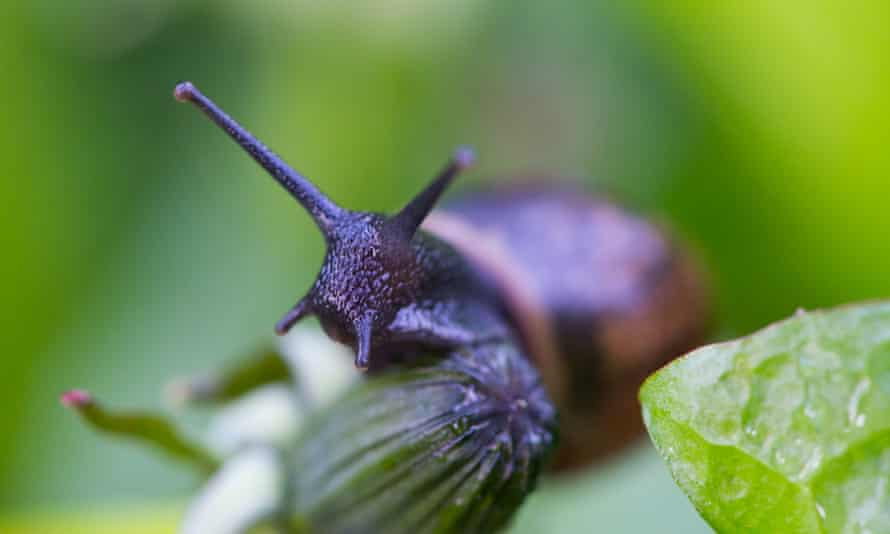 A snail looking around on a leaf.