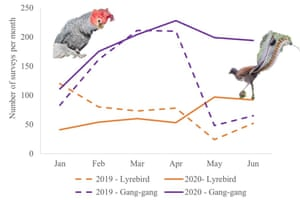 Change in the number of area-based surveys by Australian citizen scientists over the first six months of 2019 compared with 2020. Data sourced from BirdLife Australia's Birdata database.
