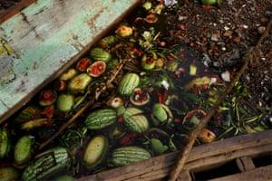 Shen Wei, Watermelons, 2016