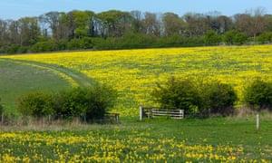 An organic farm in Norfolk, UK