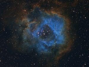 Stellar Flower Davy van der Hoeven