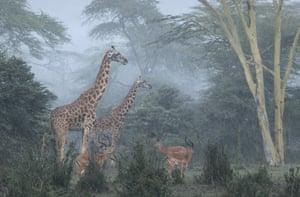 Wildlife Insight: José Fragozo (Portugal) – Nairobi National Park, Kenya