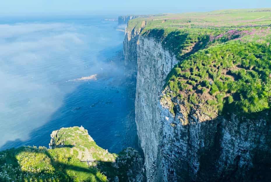 Bempton cliffs, home to many seabirds