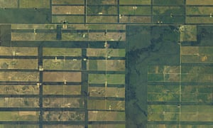 Enormous swaths of dry forest in Paraguay's sparsely populated Chaco Boreal region have been cleared for cattle ranching