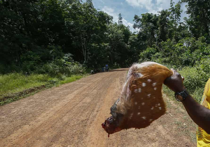 A Liberian hunter holds up the leg of an animal to sell as bushmeat on a roadside in Grand Bassa county, Liberia.