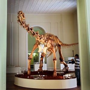 The display of the Maxakalisaurus topai dinosaur at the museum.