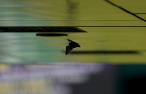 A bat flies around near the back of Centre Court.