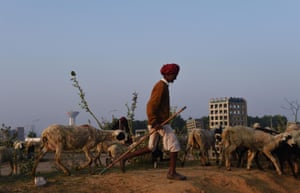 Behra Ram, 20, leads his sheep to graze near his camp