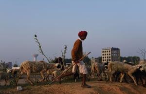 A nomadic Indian shepherd
