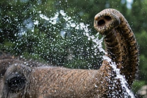 An elephant's trunk sprays water, at the Elephant Sanctuary, Hohenwald, Tennessee.