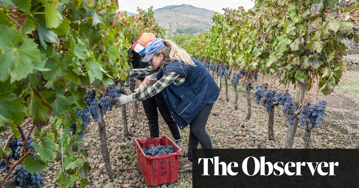 The best southern Italian white wines