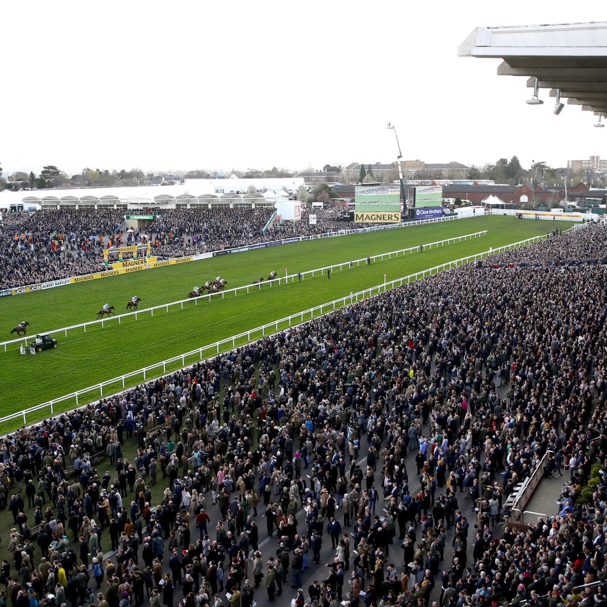 Experts call for inquiry into local death toll after Cheltenham Festival    Sport   The Guardian