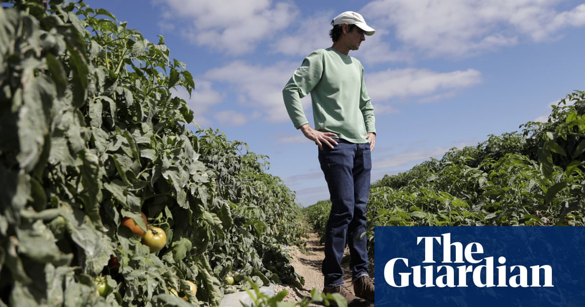 'A disastrous situation': mountains of food wasted as coronavirus scrambles supply chain