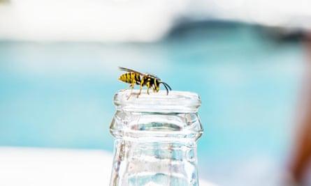 Wasp on empty bottle.