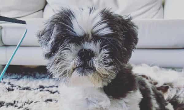 Silva's dog Shu Shu.