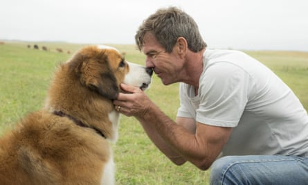 Dennis Quaid: 'I never saw any abuse of any animal. If there had been, I would have walked.'