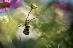 Monarch by Hazel Ellis