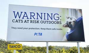 'They need your protection': Peta's billboard protesting the Banana Shire feral cat bounty.