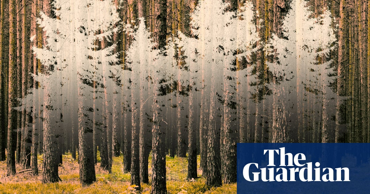 Is this the end of forests as we've known them?