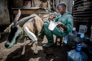 Kevin Uduny with Tin Tin the goat, on the Huruma Town Youth Group farm