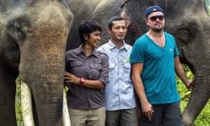 Leonardo DiCaprio poses with Sumatran elephants during his visit to Indonesia