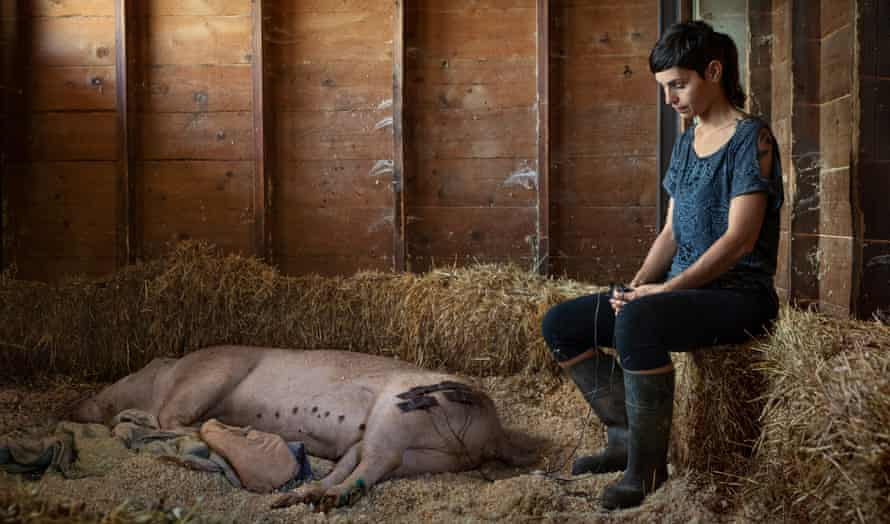 Paola the pig with volunteer Olivia Gomez de Zamora at the Gaia animal sanctuary in Spain