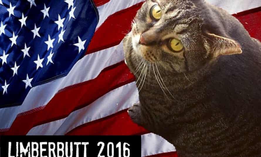 Limberbutt McCubbins: feline frontrunner