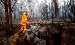 A firefighter works to contain a bushfire near Taree, New South Wales, on Sunday.