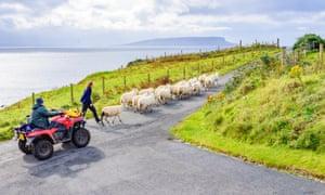 Sheep on a skye road