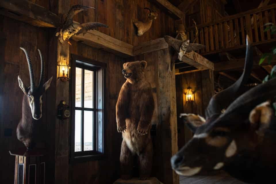 A taxidermy Alaskan brown bear and other animals are among the items displayed in the 6,000-sq-ft lodge at the Ox Ranch near Uvalde, Texas, in May.