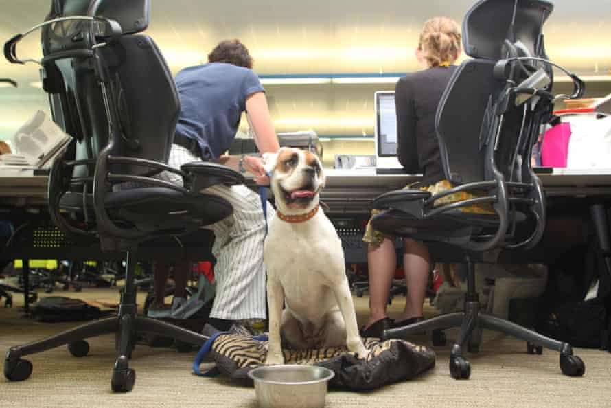a dog in the office