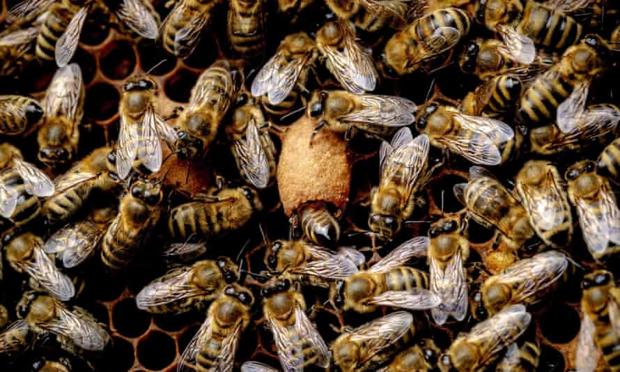 There is growing evidence that neonicotinoid pesticides could be a major contributor to declining bee populations.