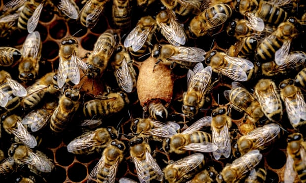 There is growing evidence that the neonicotinoid pesticides could be a major contributor to declining bee populations.