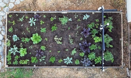 An overhead view of a raised bed with a remote-controlled gantry overhead.