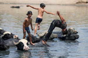 Boys play among a herd of buffaloes in the Diyala River, east of Baghdad.