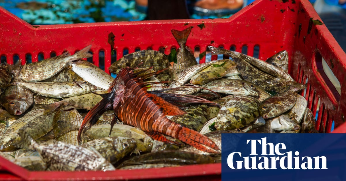 Tropical invaders: the Med's warming seas put native species in hot water