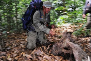 An Indonesian forest ranger discovers an elephant trap set by poachers in the Leuser ecosystem rainforest