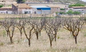 An abandoned orchard near Jumilla, Murcia, Spain.