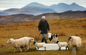 Crofter Kenneth Macdonald with his sheep at Calanais.