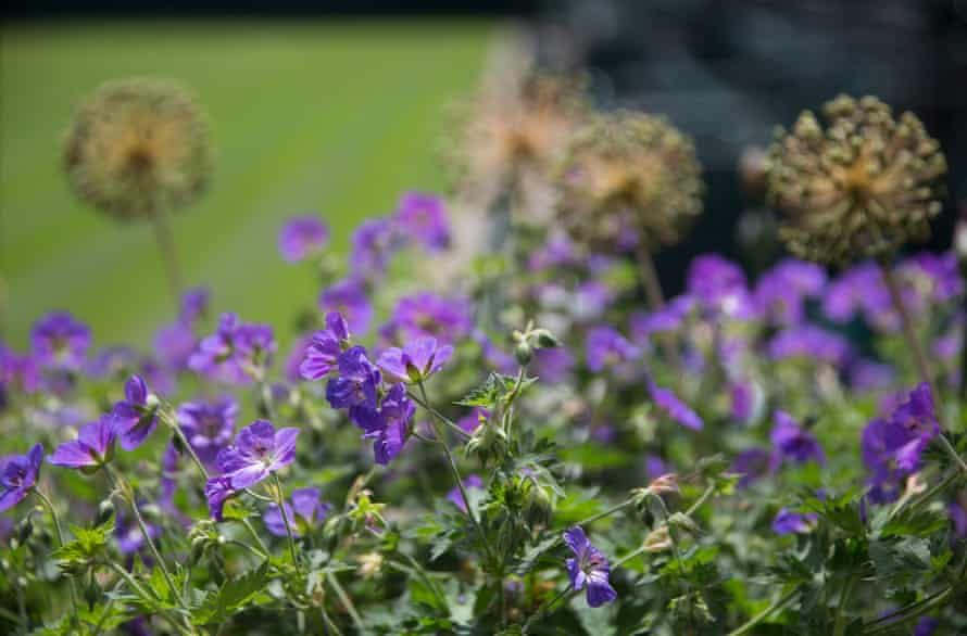 Courtside flowers in the club colours of the All England Lawn Tennis and Croquet Club.