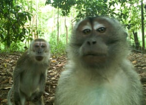 Macaques from Candid Creatures: How Camera Traps Reveal the Mysteries of Nature
