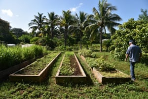 Organic farmer Miguel Angel Salcines inspects vegetable planting beds at the 25-hectare Alamar farm. Cuban growers often plant organic crops in terrace-like beds because of past chemical contamination of soil.