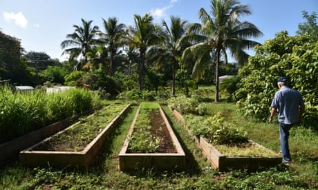 Organic or starve: can Cuba's new farming model provide food security?