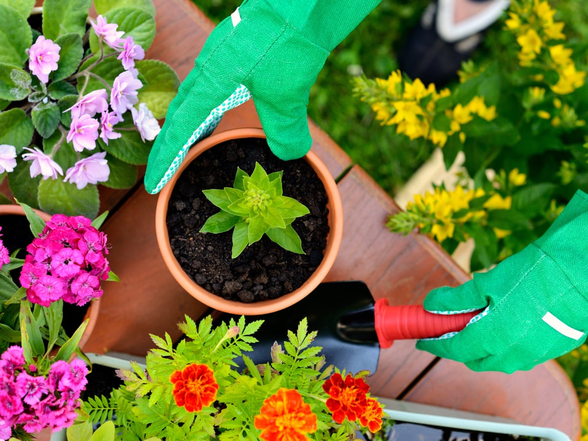 Gardening in lockdown: where can I buy plants and supplies?   Consumer  affairs   The Guardian