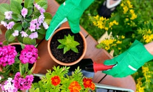 Gardening can boost your sense of wellbeing